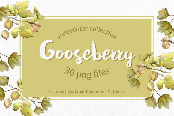 Print on Demand: Watercolor Gooseberry  Graphic Illustrations By MyStocks