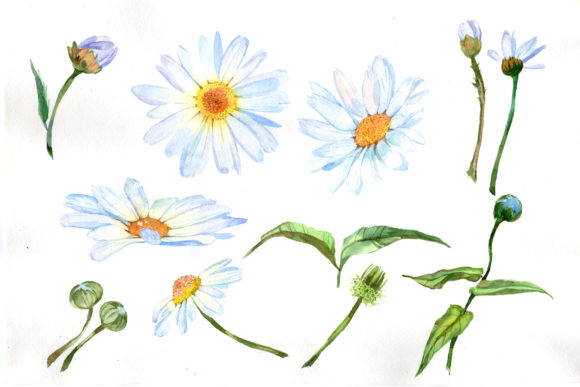 Print on Demand: White Daisy Watercolor Flower Set Graphic Illustrations By MyStocks