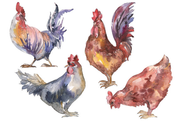 Print on Demand: Agriculture Cock, Hen Watercolor Graphic Illustrations By MyStocks