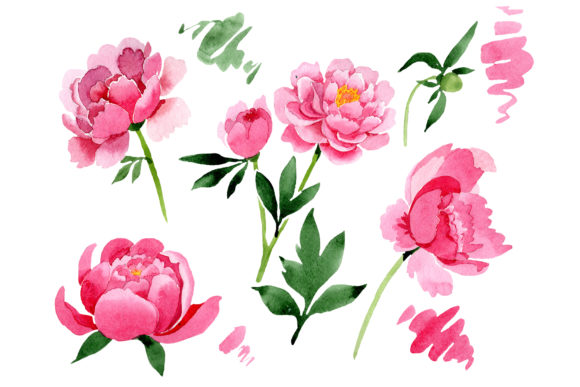 Print on Demand: Raspberry Red Peonies Flower Watercolor Graphic Illustrations By MyStocks