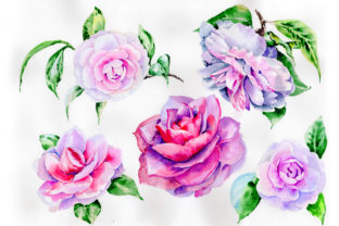Print on Demand: Stunning Pink Hulthemia Watercolor Set Graphic Illustrations By MyStocks