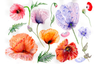 Print on Demand: Sweet Flowers Colorful Poppy Watercolor Set Graphic Illustrations By MyStocks 1