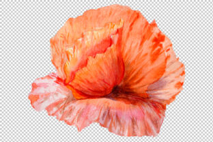 Print on Demand: Sweet Flowers Colorful Poppy Watercolor Set Graphic Illustrations By MyStocks 3