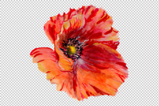 Print on Demand: Sweet Flowers Colorful Poppy Watercolor Set Graphic Illustrations By MyStocks 4