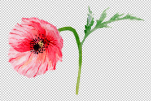 Print on Demand: Sweet Flowers Colorful Poppy Watercolor Set Graphic Illustrations By MyStocks 5