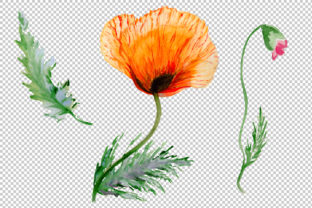Print on Demand: Sweet Flowers Colorful Poppy Watercolor Set Graphic Illustrations By MyStocks 7