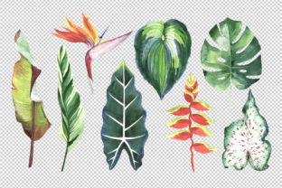 Print on Demand: Tropical Clipart Watercolor Graphic Illustrations By MyStocks 3