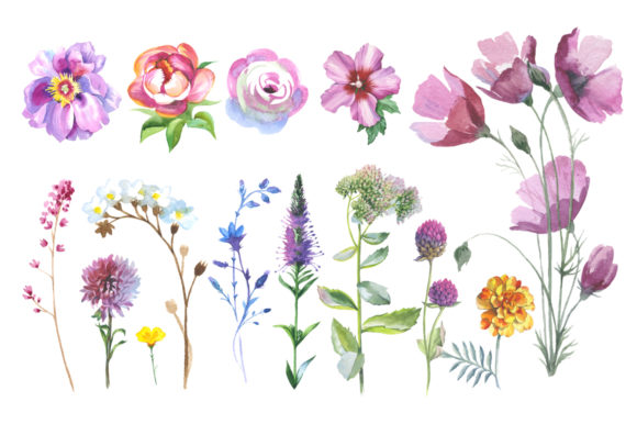 Wild Flowers Watercolor Set Graphic Image