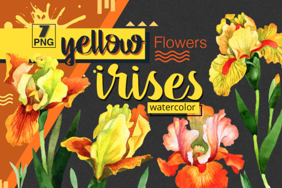Print on Demand: Yellow Irises Watercolor Clipart Graphic Illustrations By MyStocks