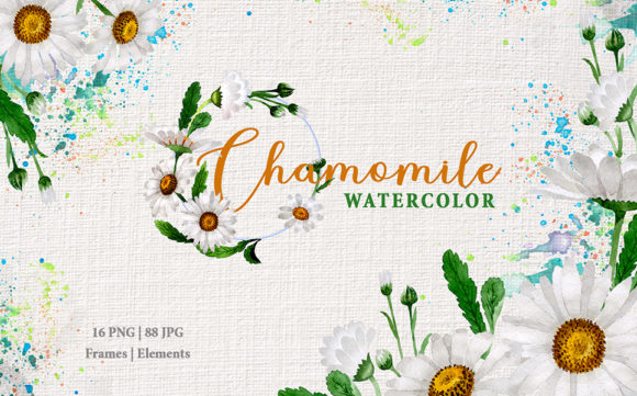 Print on Demand: Chamomile White Watercolor Graphic Illustrations By MyStocks