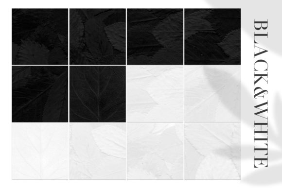 Print on Demand: 12 Black & White Leaves Textures Graphic Textures By ArtistMef - Image 2