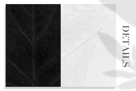 Print on Demand: 12 Black & White Leaves Textures Graphic Textures By ArtistMef - Image 3