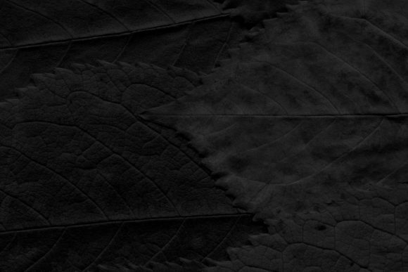 Print on Demand: 12 Black & White Leaves Textures Graphic Textures By ArtistMef - Image 5