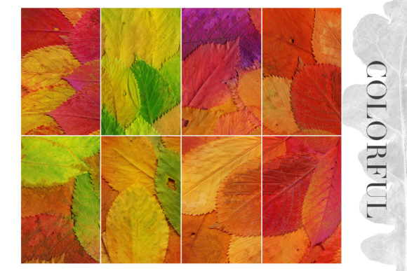 Print on Demand: 20 Colorful Leaves Backgrounds Graphic Textures By ArtistMef - Image 3
