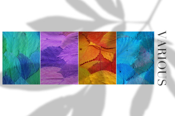 Print on Demand: 20 Colorful Leaves Backgrounds Graphic Textures By ArtistMef - Image 4