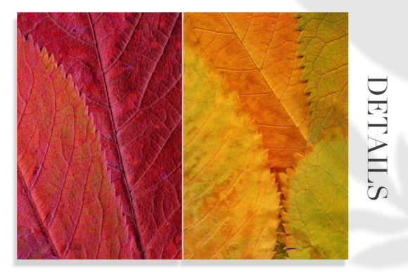 Print on Demand: 20 Colorful Leaves Backgrounds Graphic Textures By ArtistMef - Image 5