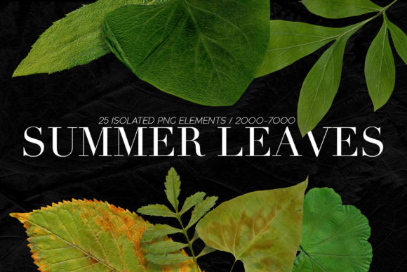 Print on Demand: 25 Isolated Summer Leaves Graphic Objects By ArtistMef - Image 1