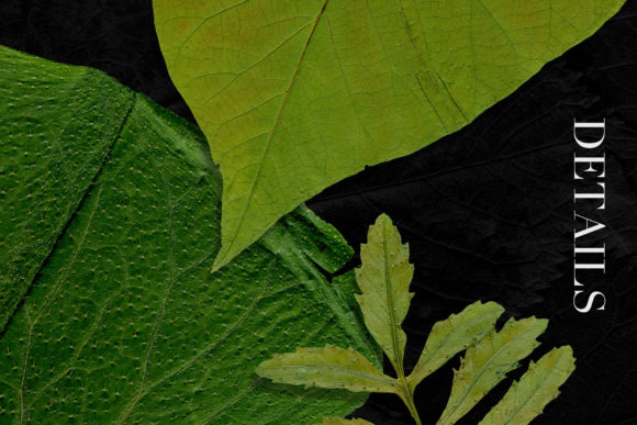 Print on Demand: 25 Isolated Summer Leaves Graphic Objects By ArtistMef - Image 4
