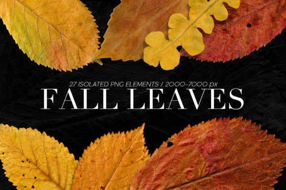 Print on Demand: Isolated Fall Leaves Graphic Objects By ArtistMef