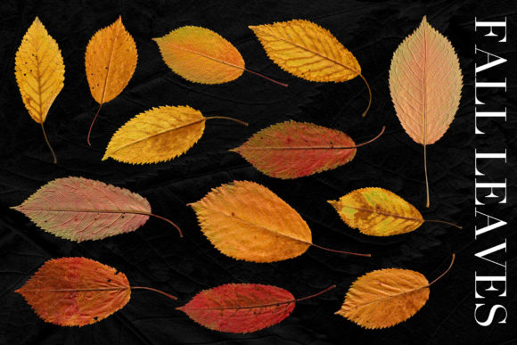 Print on Demand: Isolated Fall Leaves Graphic Objects By ArtistMef - Image 3