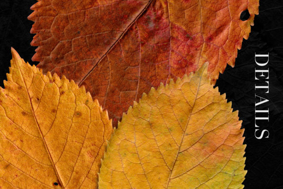Print on Demand: Isolated Fall Leaves Graphic Objects By ArtistMef - Image 4