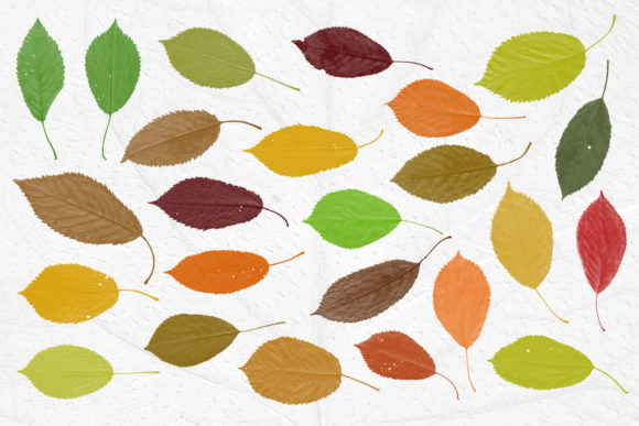 Print on Demand: Leaves Photoshop Stamp Brushes Graphic Brushes By ArtistMef - Image 2