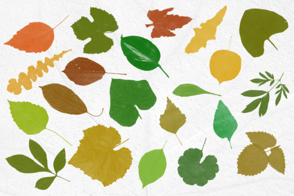 Print on Demand: Leaves Photoshop Stamp Brushes Graphic Brushes By ArtistMef - Image 3
