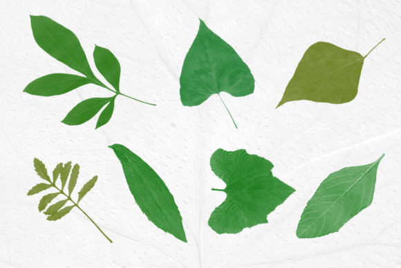 Print on Demand: Leaves Photoshop Stamp Brushes Graphic Brushes By ArtistMef - Image 4