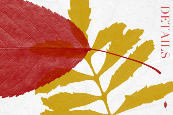 Print on Demand: Leaves Photoshop Stamp Brushes Graphic Brushes By ArtistMef - Image 5