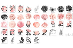 Print on Demand: Blush and Charcoal Floral Clipart Graphic Illustrations By Digital Curio 3