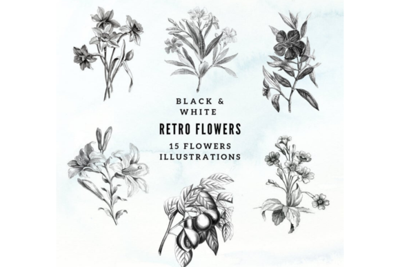 Vintage Botanical Illustrations Graphic Illustrations By Aneta Design