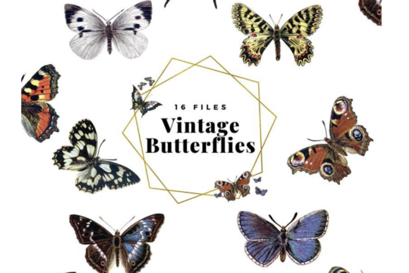 Vintage Butterflies Llustrations Graphic Illustrations By Aneta Design