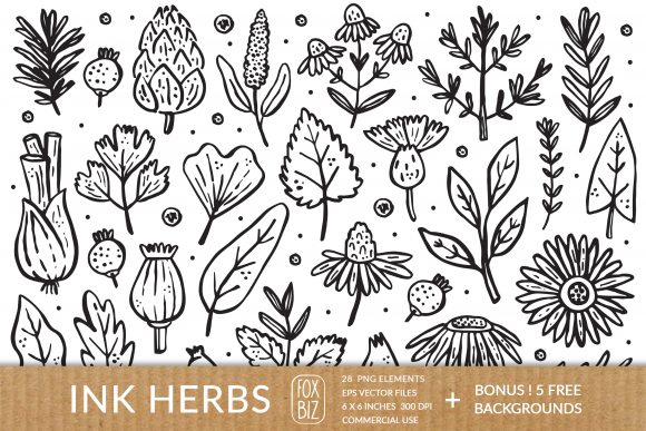 Print on Demand: Ink Herbs, Plants Graphic Illustrations By FoxBiz