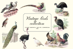 Vintage Antique Bird Clip Art Graphics Graphic Illustrations By Aneta Design