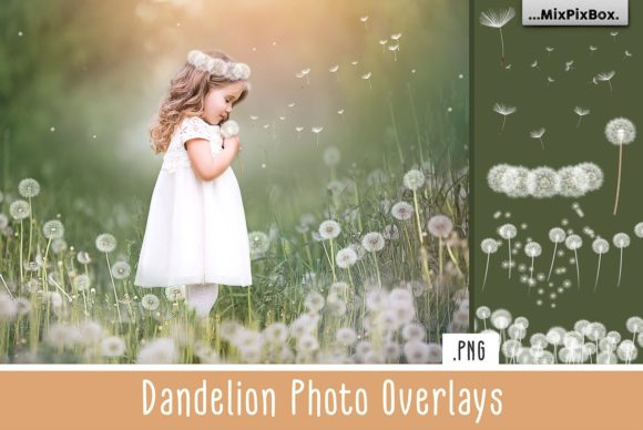 Print on Demand: Dandelion Overlays Graphic Layer Styles By MixPixBox