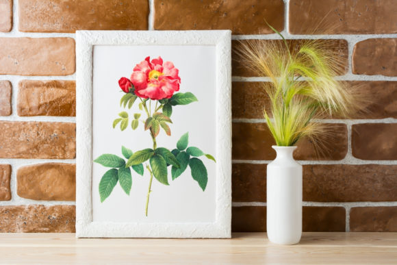 Romantic Pink Rose in Bloom Graphic Illustrations By Aneta Design