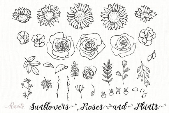 Sunflowers, Roses, Rosehip, Plants Graphic Illustrations By Rasveta