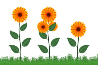 Print on Demand: Sun Flower Vector Illustration Graphic Illustrations By edywiyonopp