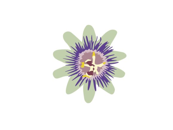Print on Demand: Passion Flower Graphic Illustrations By archshape