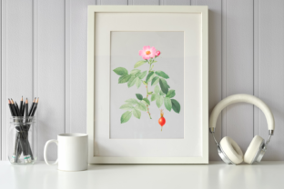 Petite Pink Rose Vintage Illustration Graphic Illustrations By Aneta Design