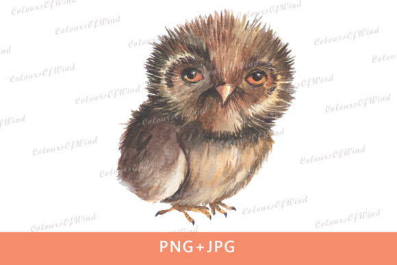 Print on Demand: Watercolor Owl Sub Transfer Design Graphic Illustrations By colours_of_wind