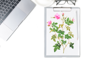 Wild Branched Pink Rose Graphic Graphic Illustrations By Aneta Design