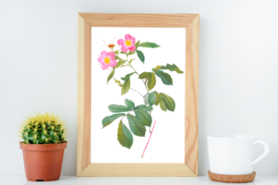 Wild Pink Vintage Rose Illustration Graphic Illustrations By Aneta Design