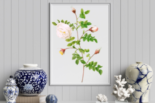 Wild White Red Rose in Bloom Graphic Graphic Illustrations By Aneta Design