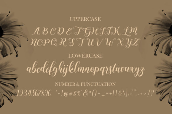 Andesia Font Popular Design