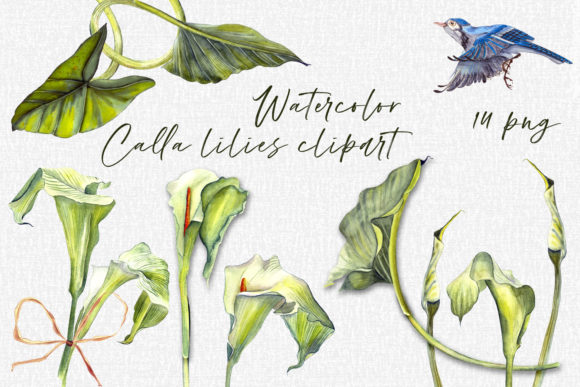Print on Demand: Calla Lily Watercolor Floral Graphic Illustrations By ElenaZlataArt