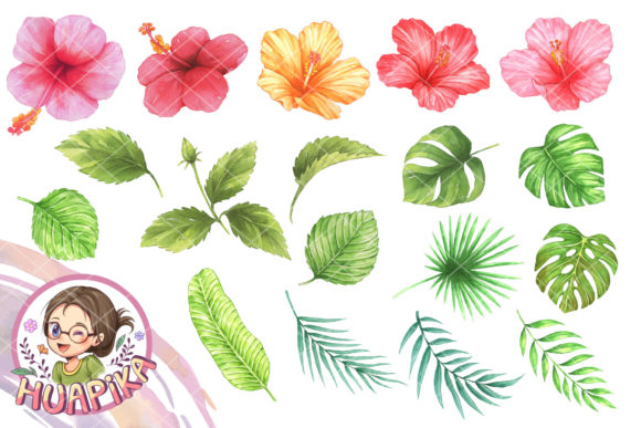 Hibiscus Flower and Leaves Graphic Illustrations By huapika