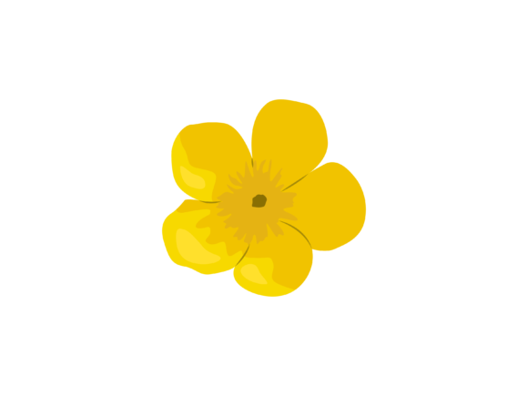 Print on Demand: Buttercup Flower Graphic Illustrations By archshape