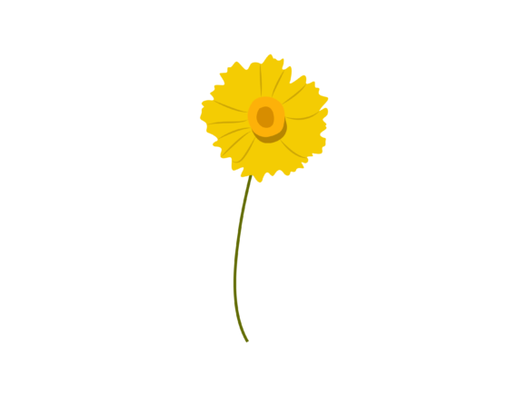 Print on Demand: Tickseed Flower Graphic Illustrations By archshape