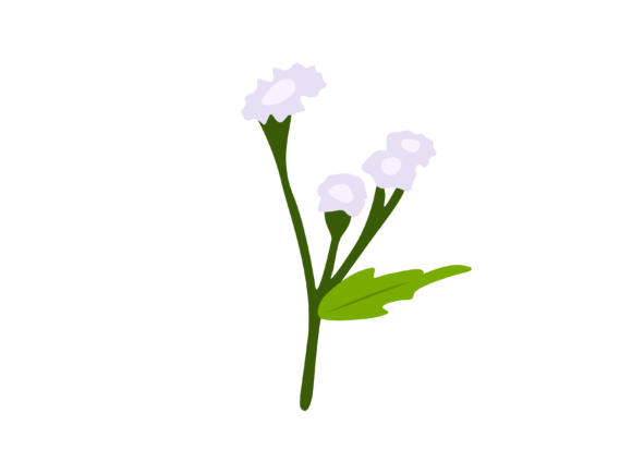 Print on Demand: Ageratum Conyzoides Flower Graphic Illustrations By archshape